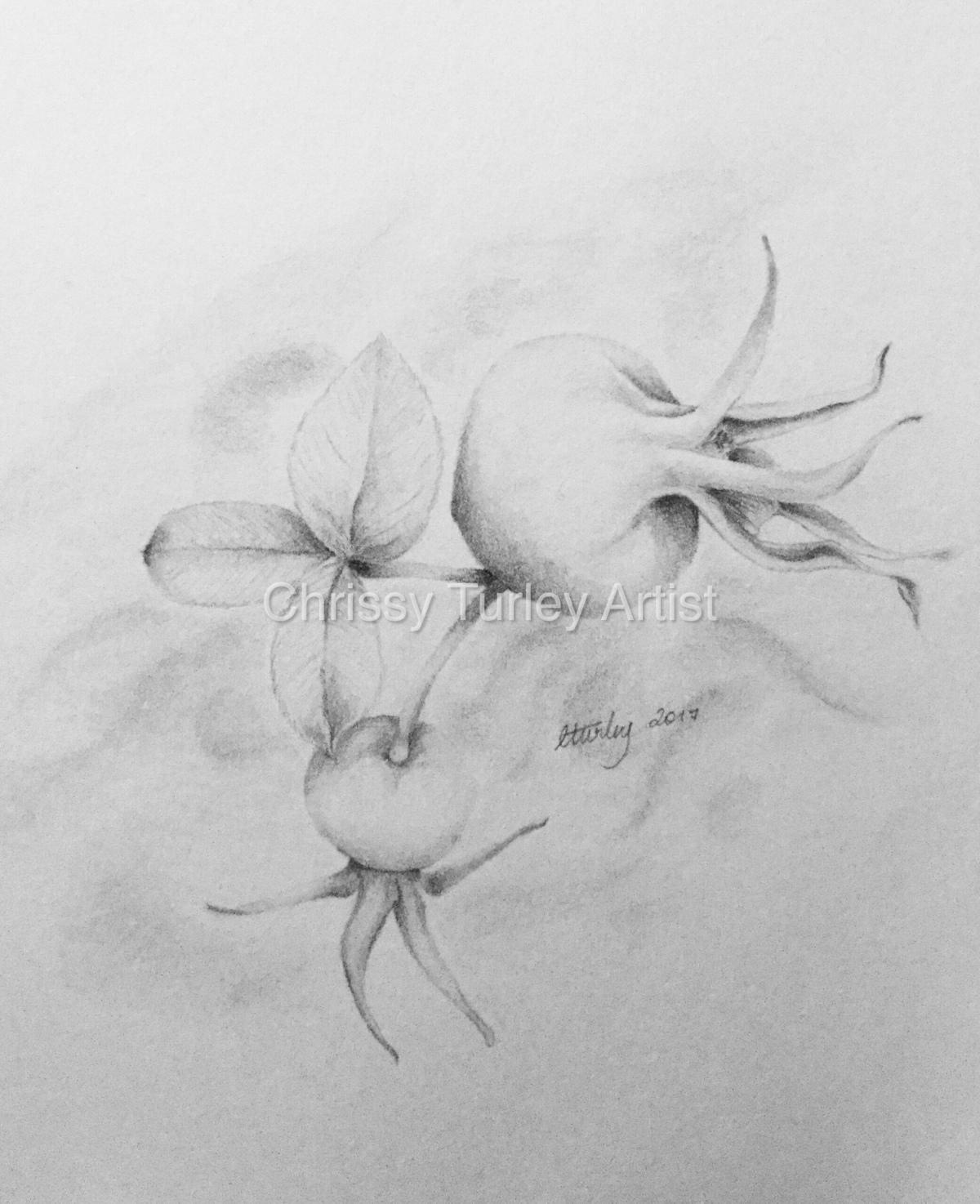 Rosehip Sketch